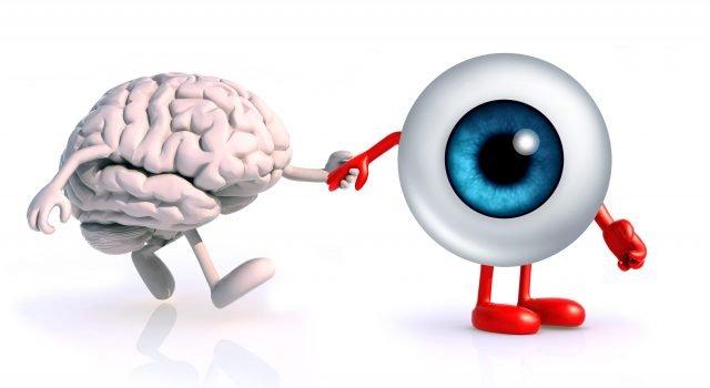 Όραση, εγκέφαλος και μάθηση